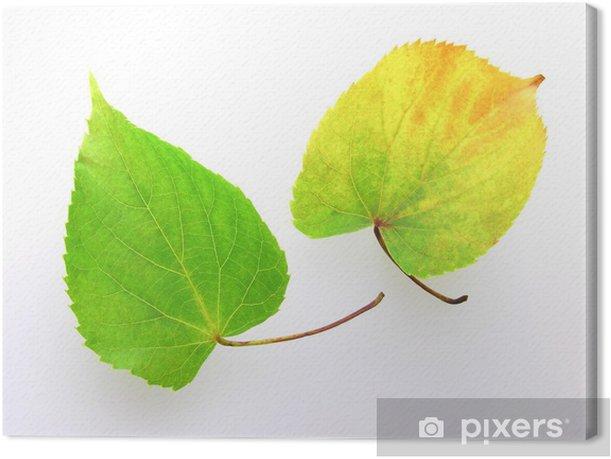 Leinwandbild シ ナ ノ キ の 葉 - Bäume