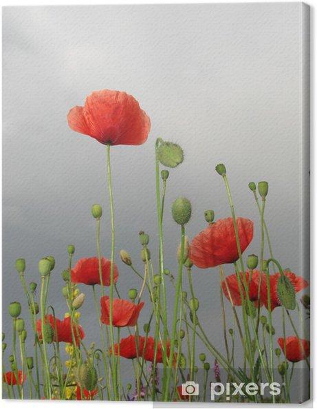 Leinwandbild Полевые маки 4 - Blumen