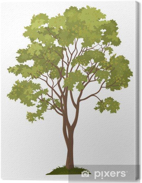 Leinwandbild Ahornbaum und grünen Gras - Naturwunder