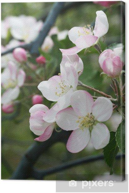 Leinwandbild Apfelblüte am Zweig - Bäume