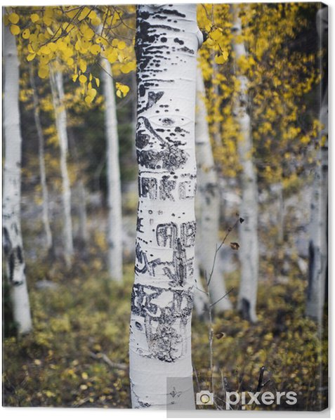 Leinwandbild Aspen-Baum mit Schnitzereien - Wälder
