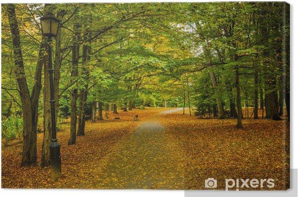 Leinwandbild Autumn alley - Freiluftsport