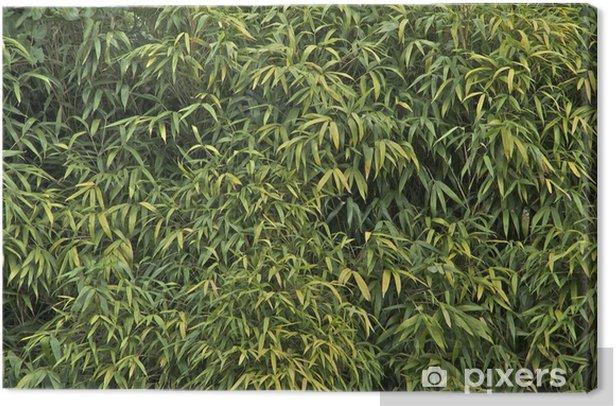 Leinwandbild Bambu - Haus und Garten