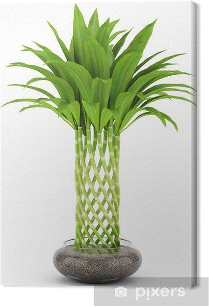 Leinwandbild Bambus Pflanze Im Topf Isoliert Auf Weissem Hintergrund