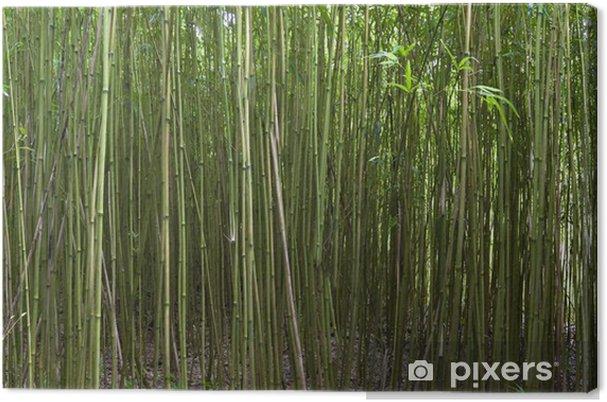 Leinwandbild Bambus Wald Auf Der Insel Maui Hawaii Pixers Wir