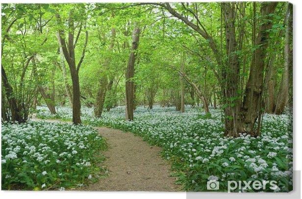 Leinwandbild Bärlauch wachsen in Woodland - Pflanzen