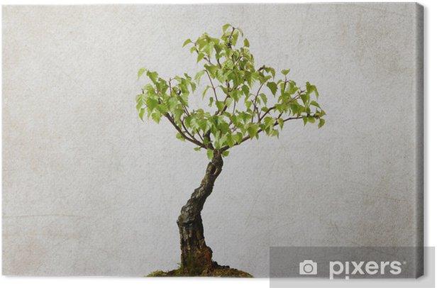 Leinwandbild Baum auf Hintergrund ruiniert - Jahreszeiten
