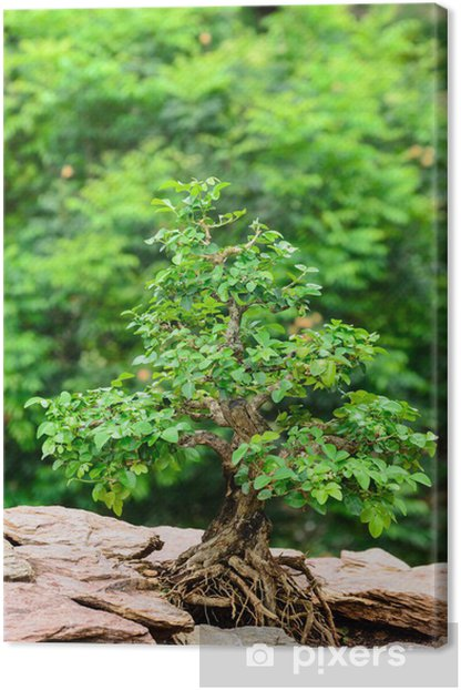 Leinwandbild Baum wächst auf einem Felsen - Bäume