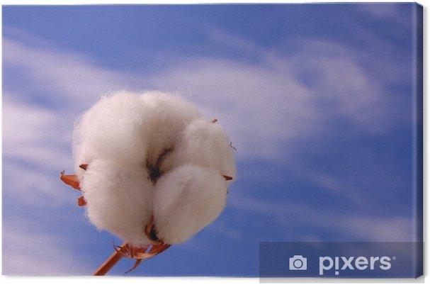 Leinwandbild Baumwollknospe - Pflanzen