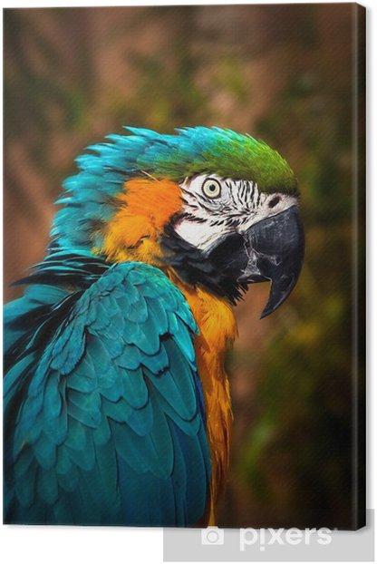 Leinwandbild Beautiful Blue and Gold Macaw - Parrot Portrait - Themen