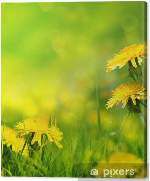 Leinwandbild Beautiful Spring Flowers Background Pixers Wir