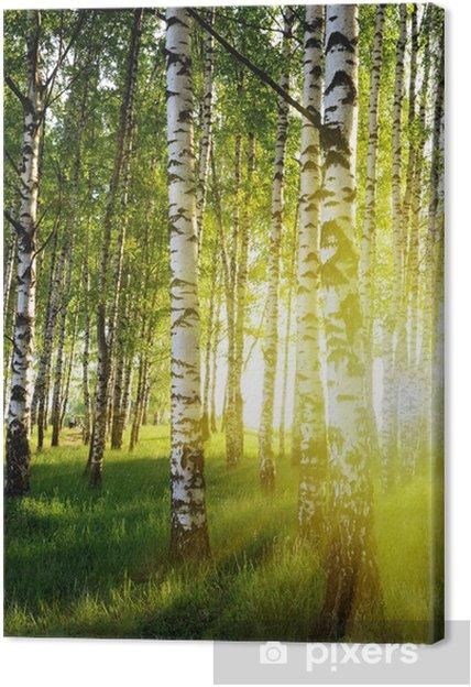Leinwandbild Birken im Sommer Wald • Pixers® - Wir leben