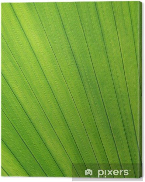 Leinwandbild Blattstruktur - Pflanzen