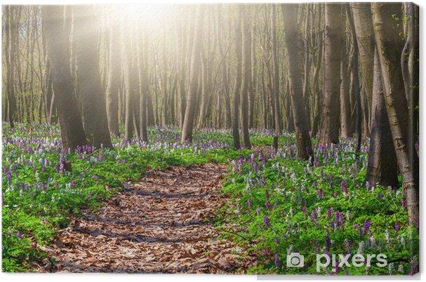 Leinwandbild Blühende Blumenfelder im Frühjahr Wald - Wälder