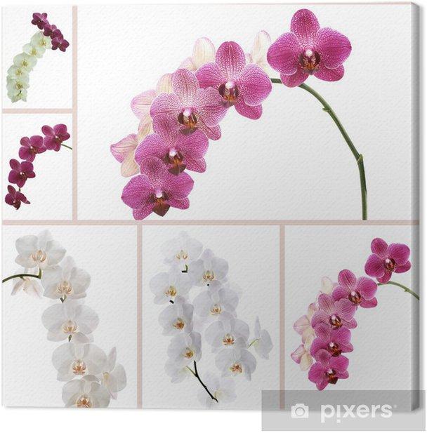 Leinwandbild Blumen-Orchideen - Blumen