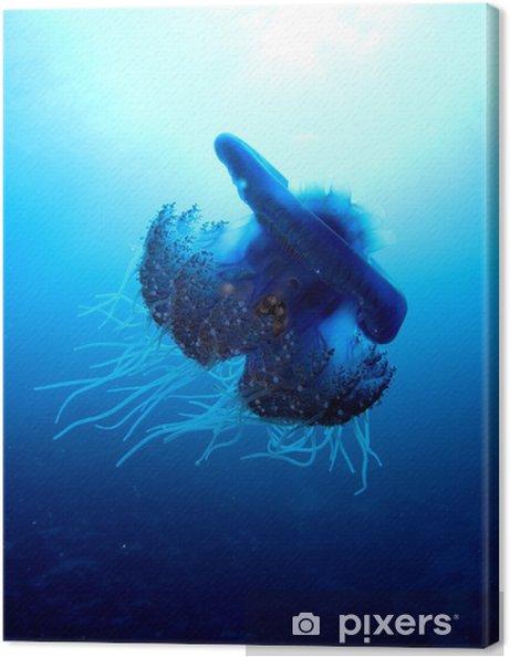 Leinwandbild Blumenkohl Quallen - Cephea cephea - Unterwasserwelt