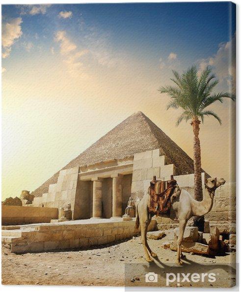 Leinwandbild Camel in der Nähe von Pyramide - Denkmäler