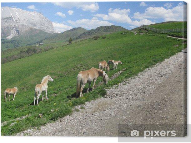 Leinwandbild Cavalli sulle Alpi delle Dolomiti - Europa