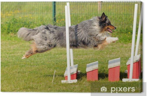 Leinwandbild Chien d'agility - Säugetiere