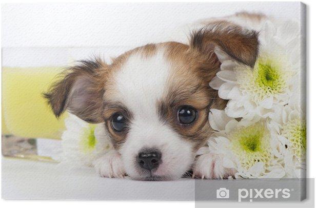 Leinwandbild Chihuahua Welpen mit Chrysanthemen und gelbe Kerze - Säugetiere