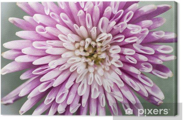 Leinwandbild Chrysantheme Blume Großansicht - Blumen