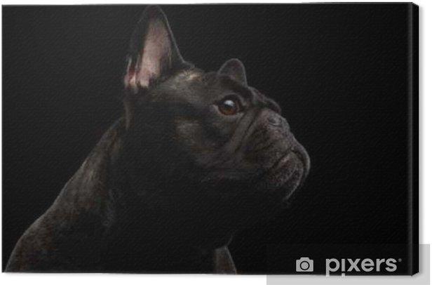 Leinwandbild Close-up Französisch Bulldog Hund wie Monster in Profilansicht Isoliert - Tiere