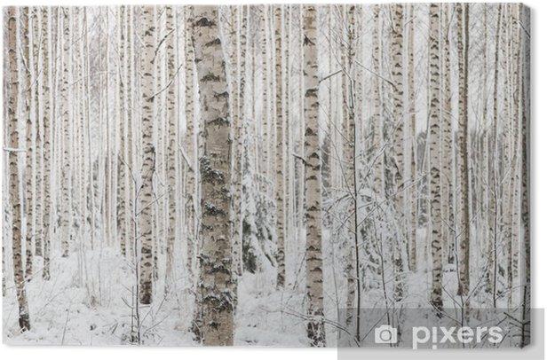 Leinwandbild Close-up von einer Birke im Winter in Finnland - Jahreszeiten
