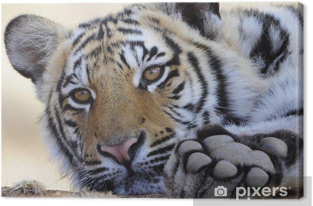 Leinwandbild Closeup Portrait Bild von einem Königstiger - Themen
