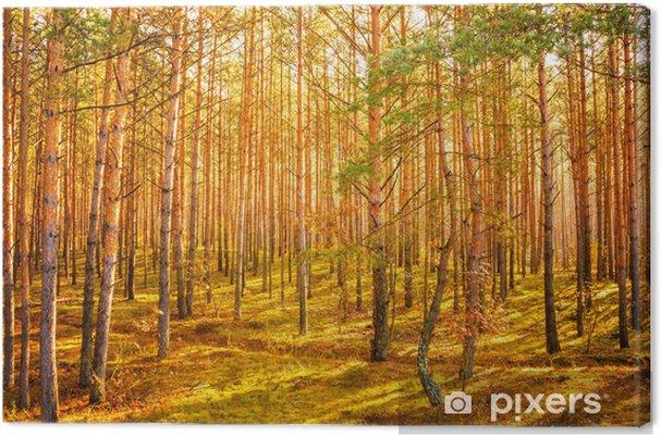 Leinwandbild Dawn in alten Sommerwald - Jahreszeiten
