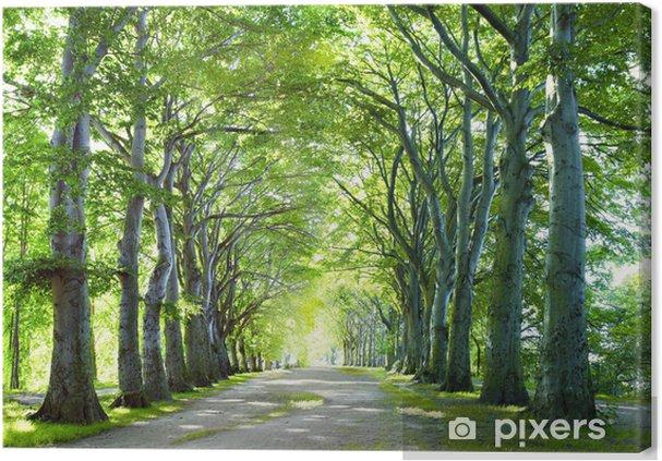 Leinwandbild Der Weg im Wald - Themen