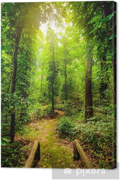 Leinwandbild Die Schönheit der tropischen Wälder. tropische botanische Vielfalt und hohe Feuchtigkeit. - Landschaften