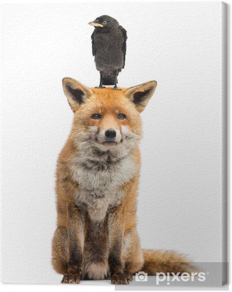 Leinwandbild Dohle hocken auf den Kopf des roten Fuchses, isoliert auf weiß - Säugetiere