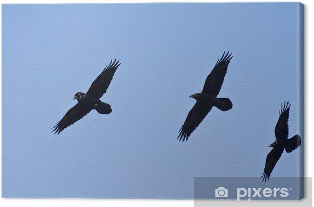 Leinwandbild Drei schwarze Raben fliegen in einem blauen Himmel - Vögel