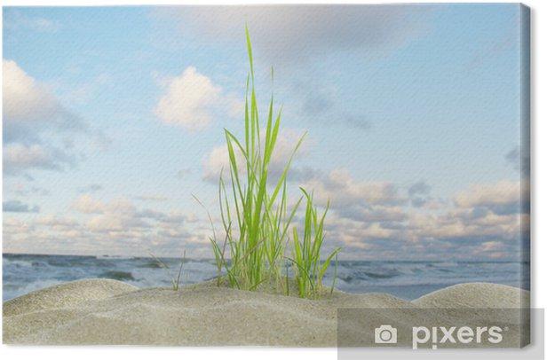 Leinwandbild Dünengras und Meer - Pflanzen