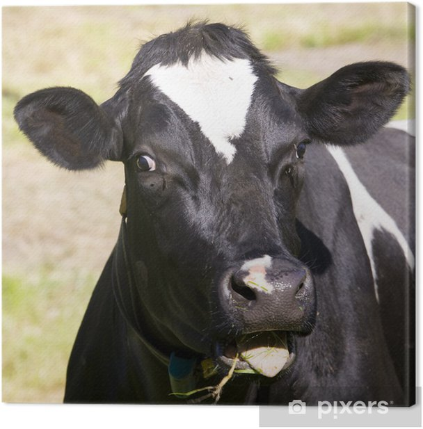 Leinwandbild Dutch cow - Säugetiere