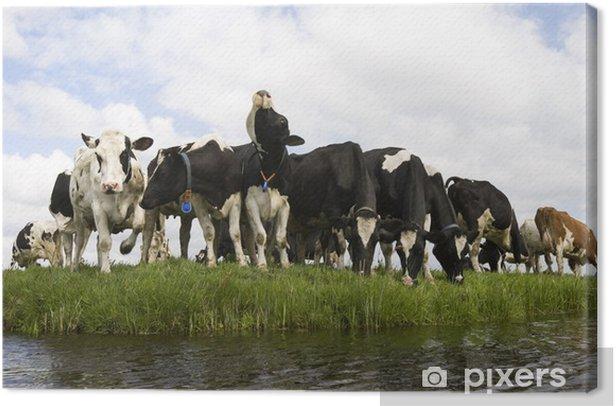 Leinwandbild Dutch cows - Säugetiere