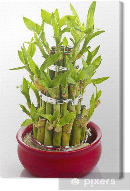 Leinwandbild Ein Glucklicher Bambus Pflanze Pixers Wir Leben