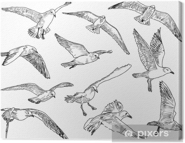 Leinwandbild Ein Schwarm Möwen - Vögel