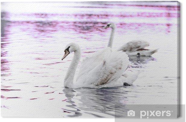 Leinwandbild Einsamer Schwan - Vögel