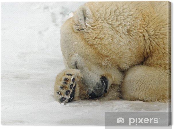 Leinwandbild Eisbär in der Winter im Norden - Säugetiere