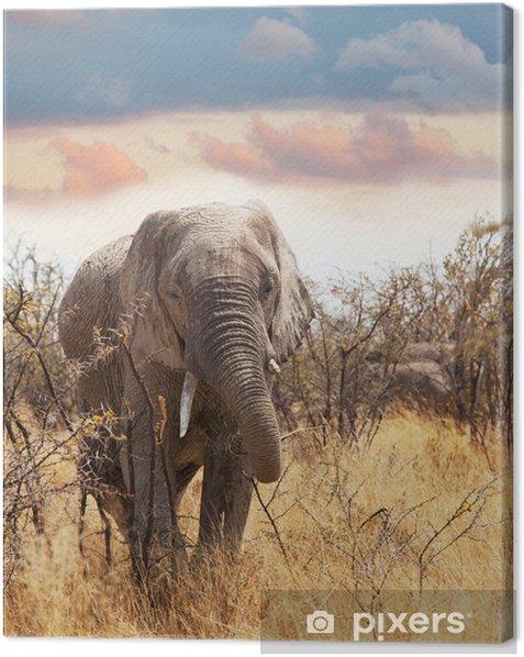 Leinwandbild Elefant - Säugetiere