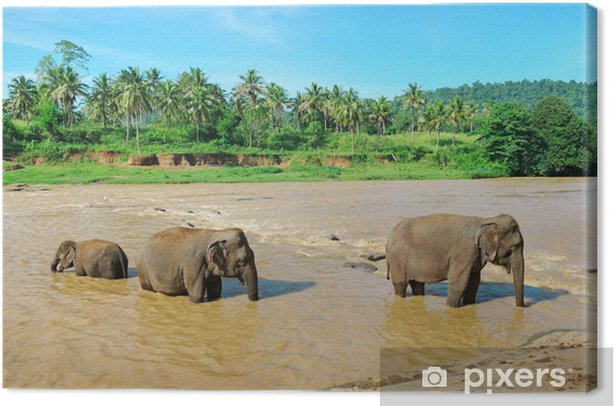 Leinwandbild Elephant Gruppe in den Fluss - Jahreszeiten