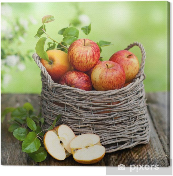 Leinwandbild Erntezeit - Apfelbäume