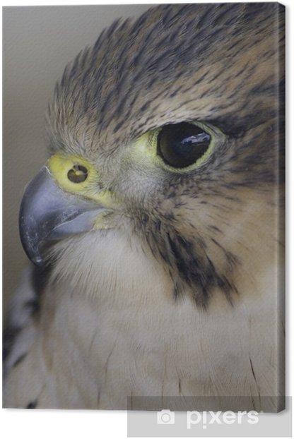 Leinwandbild Falken lanner - Vögel
