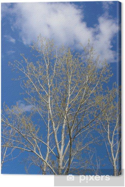 Leinwandbild Feder Pappel - Bäume