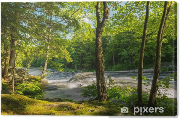 Leinwandbild Fluss in den Wald - Themen