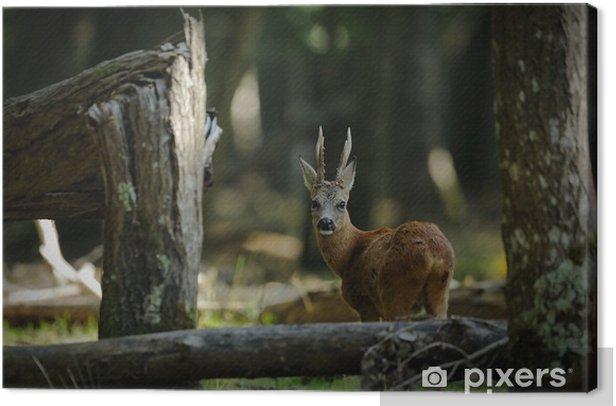 Leinwandbild Foret - Säugetiere
