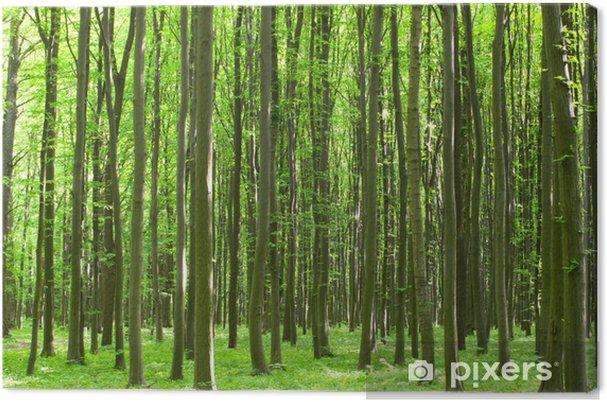 Leinwandbild Forst - Pflanzen
