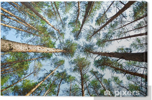 Leinwandbild Forst - Jahreszeiten