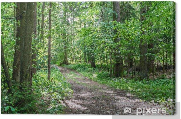 Leinwandbild Forststraße durch üppige grüne Wälder - Jahreszeiten